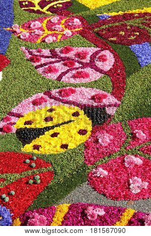 SPELLO ITALY - JUNE 7: Floral Carpet on June 7 2015 in Spello Italy. This event takes place every year and every sector honors a specific artist or subject
