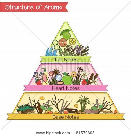 Aromatic structure notes guide for perfume, scent and aroma infographic. Top, heart, middle and base notes pyramid chart with examples of popular aroma essenses.