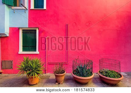 Plants infront of red facade of houses on the famous island Burano, Venice, Italy