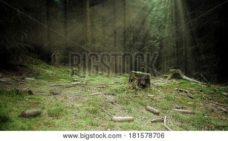 Lone tree stump in the dark woods