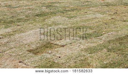 Squares of Fresh Bermuda Sod in New Lawn