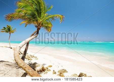 Coconut Palm Trees On White Sandy Beach