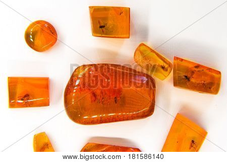 Palanga Lithuania - August 12 2012: Exhibits of amber museum insects frozen in amber. Hardened pieces of resin are used for making stylish Baltic jewelry. Palanga Amber Museum in botanical park in Lithuanian resort