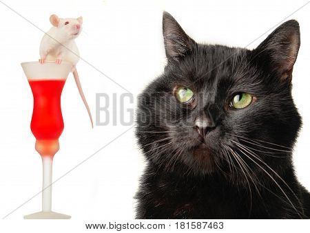 Black cat and ret on a white background