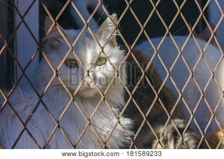 cats trap and is stuck in a steel wire netting cage,hoping for freedom with sad feeling