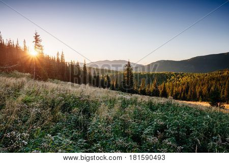Bright hills and gorgeous scene of the alpine valley. Location place Carpathian, Ukraine, Europe. Wonderful summertime wallpaper. Sunny day on outdoor. Explore the world's beauty and wildlife.