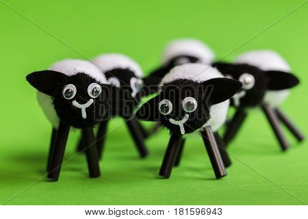 Miniature Lambs