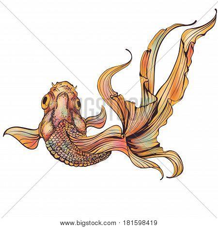 Beautiful colored goldfish isolated on white background
