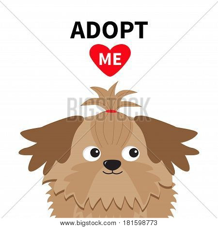 Adopt me. Dont buy. Shih Tzu Dog head inside opened cardboard package box. Pet adoption. Puppy pooch red heart. Flat design. Help homeless animal concept. White background. Isolated. Vector
