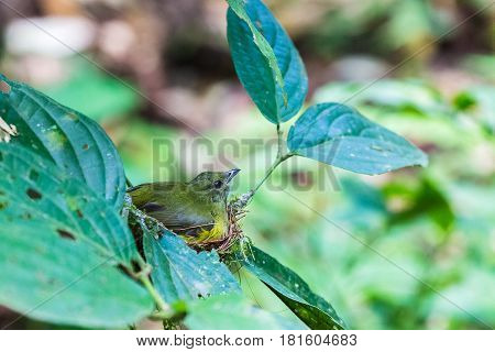 Small Bird On Its Nest