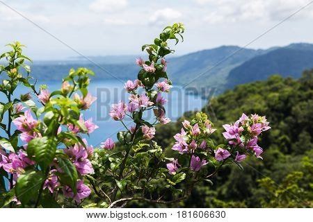 Flowers In Front Of Apoyo Lagoon