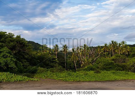 Lush Green Landscape Meets The Pacific Ocean