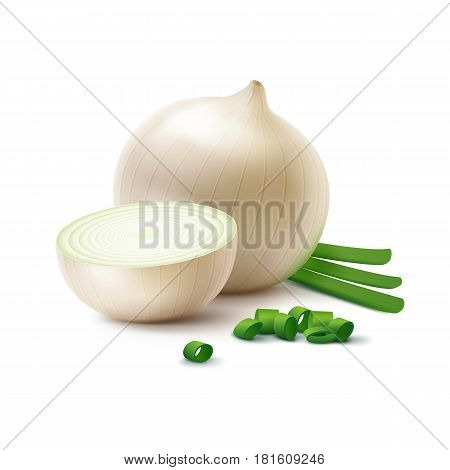 Vector Fresh Whole and Sliced White Onion Bulbs with Chopped Green Onions Close up Isolated on White Background