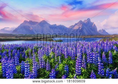 Famous grass hills near Stokksnes mountains, Iceland