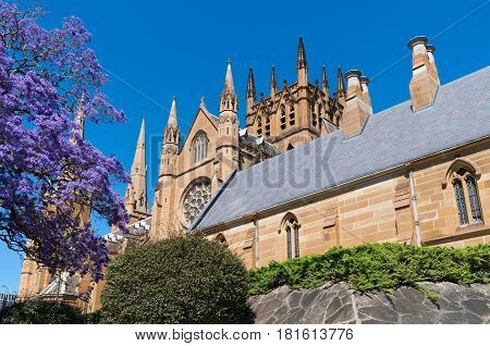 landmark cathedral of victorian gothic architectural style in central business district of sydney new south wales australia