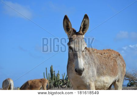 Gorgeous look at blue skies surrounding a donkey.