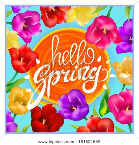 Hello Spring Colotful Tulips Flowers Background With Lettering And White Frame. Template For Greetin