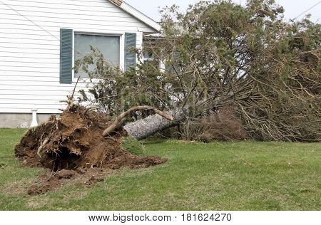 Tree uprooted and storm damage to a house from tornado and high winds