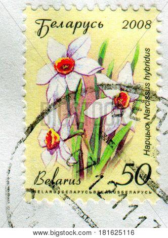 GOMEL, BELARUS, APRIL 10, 2017. Stamp printed in Belarus shows image of  The Narcissus hybridus, circa 2008.