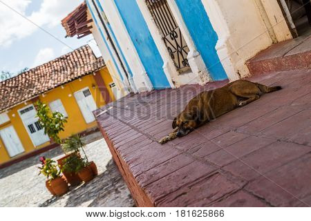 dog as he rested away from the hot sun in Sancti Spiritus, Cuba.
