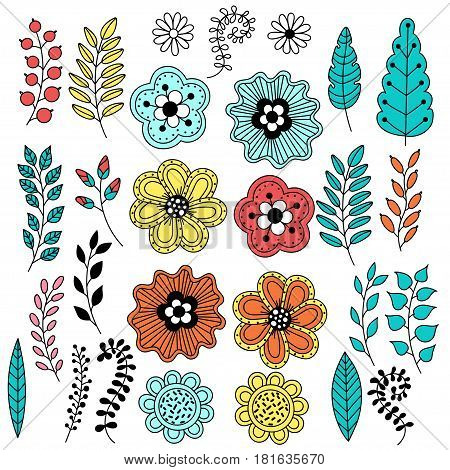 Hand Drawn vintage floral elements (leaves berries flowers flower buds) and text frame. Set of flowers to make your floral bouquet.