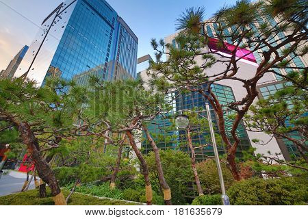 Dwarf pines and glass high-rise buildings in Seoul, South Korea, in autumn