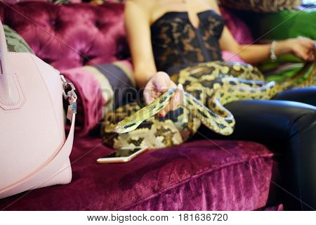 Young woman sits on couch with snake, noface, focus on head of snake