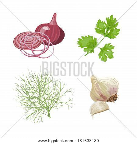 Red onion, garlic, parsley, dill. Fresh vegetables. Set collection. Vector illustration For food design labels tags posters advertising