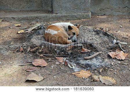 KOLKATA, INDIA - FEBRUARY 08: Dogs sleeping on the ground around Kalighat temple in Kolkata, India on February 08, 2016.