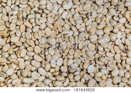 White Coffee Seed Or Unroasted Raw Coffee Bean