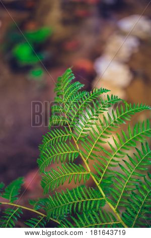Green Ecology, Fern In Rain Forest For Background