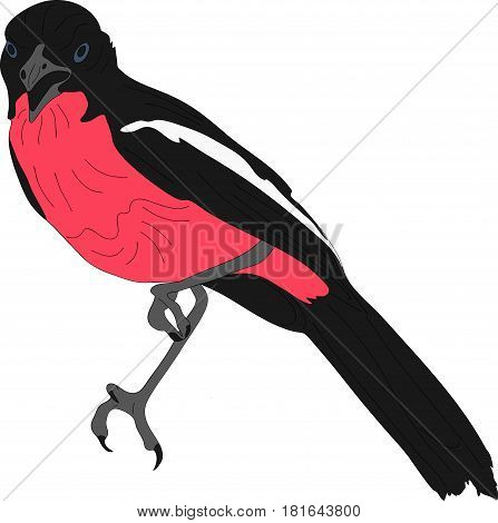 Portrait of a crimson breasted shrike - colored hand drawn vector Illustration isolated on white background