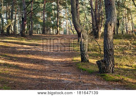 Path In The Forest In The Afternoon With Long Shadows And Sunlight Beams