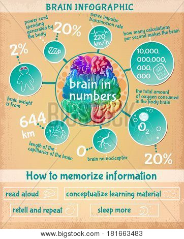 Cartoon human brain infographic concept with interesting scientific facts in numbers and ways of information memorizing development vector illustration