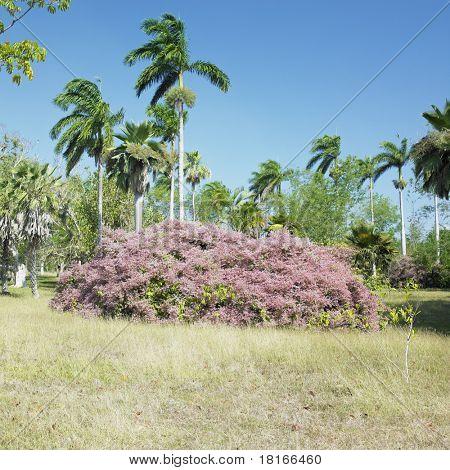 jardim botânica, Jardin Botanico de Cienfuegos, Cuba