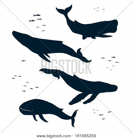 Marine mammals. Silhouette. Blue humpback and sperm whales. Isolated illustration