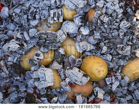 Potato Tubers Baked In The Hot Charcoal