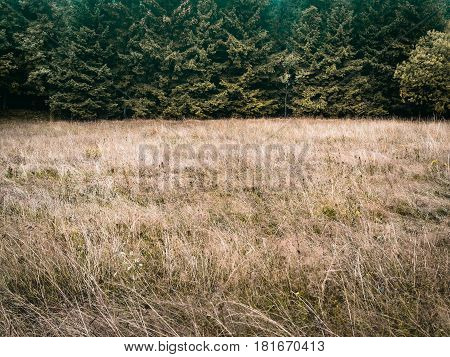 Forest trees and meadow, simple natural background backdrop, without sky, nearly just duo chrome or duotone, two-thirds, big copy space. darker muted colours