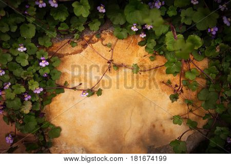 Small purple flowers on vines shrouded by green leaves against an orange cement wall