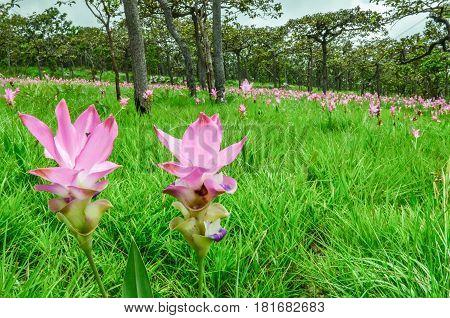The Flower Field is a pink flower garden int