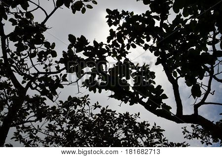 Mysterious forest backgound is silhouette under the trees view. black and white background.