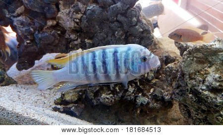 Fish swimming in an aquarium with corals