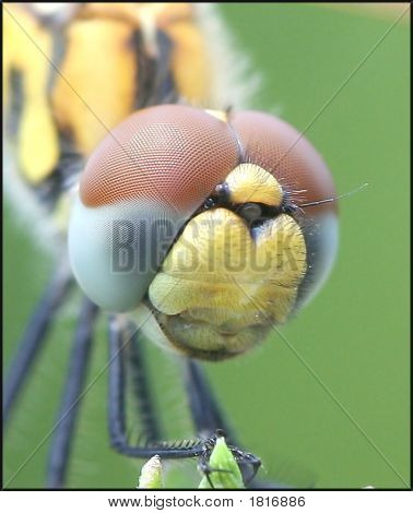 Extreme macro of a common Dragon Fly poster