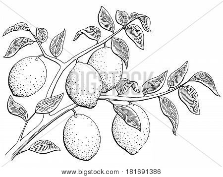 Lemon fruit graphic branch black white isolated sketch illustration vector