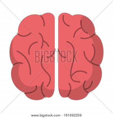 brain organ human function image vector illustration eps 10