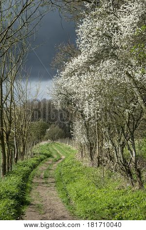 Footpath In Stormy Weather In Spring English Countryside Landscape
