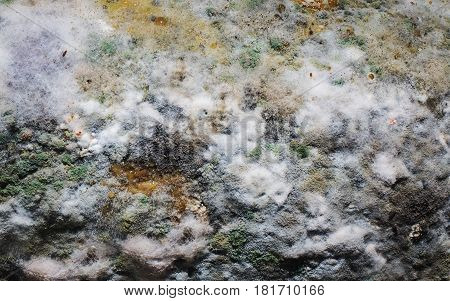 macro of mold green- white relief background