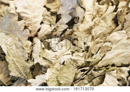 Background with the image of a dry leaves