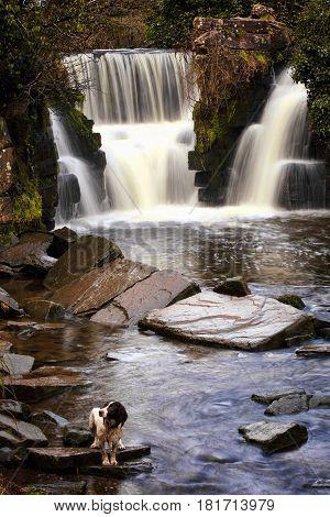 Penllergare Waterfall near Swansea in Wales, UK