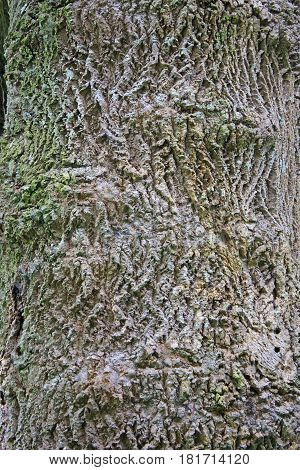close up texture of the bark of a tree